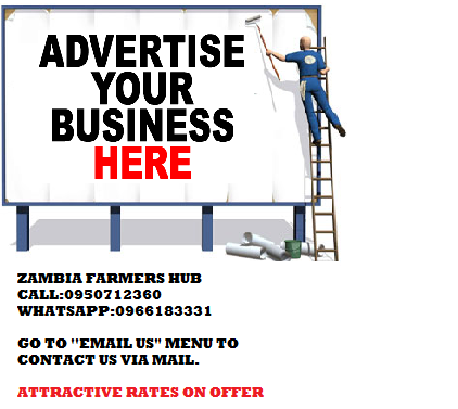 advertise your Business here for just ZK70 Monthly